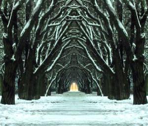 Mystic winter path by Roman Malanchuk
